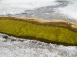 Thermophiles dorés à Norris Geyser Basin